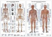 Bild von Doppelpack Anatomie-Poster
